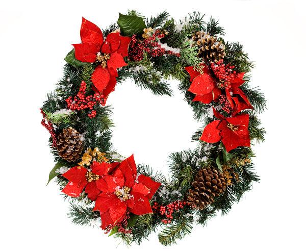Пуансеттия - одно из традиционных рождественских растений