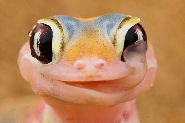 cute-reptiles-107__605