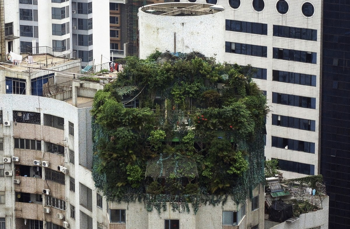 a-suspected-illegal-construction-is-seen-covered-by-green-plants-atop-a-19-story-residential-building-in-guangzhou-china-on-april-11-the-suspected-illegal-construction-was-built-10-years-ago-local-law-enforcement-departm
