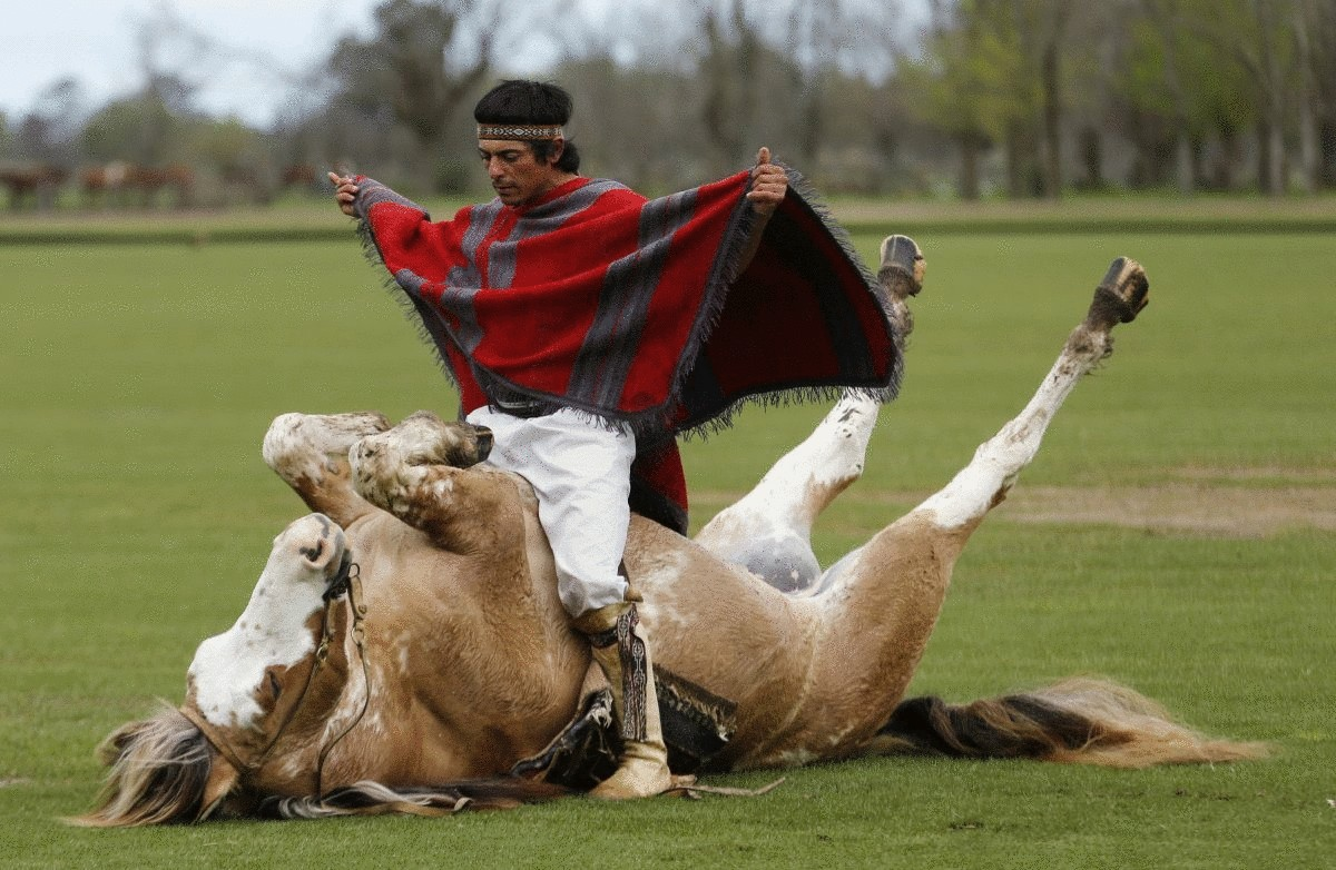 horse-whisperer-martin-tata-sits-on-his-five-year-old-horse-primavera-as-he-performs-a-demonstration-of-indian-taming-at-the-polo-club-puesto-viejo-ranch-in-canuelas-argentina-tata-says-his-techniques-are-less-violent-an