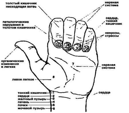 Диагностика по ногтям в восточной медицине
