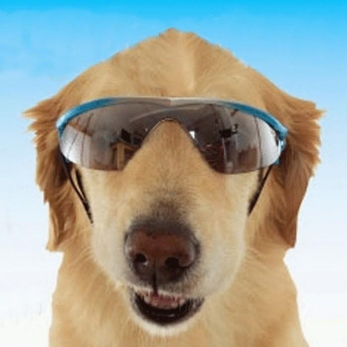 Затемненные очки для собак.