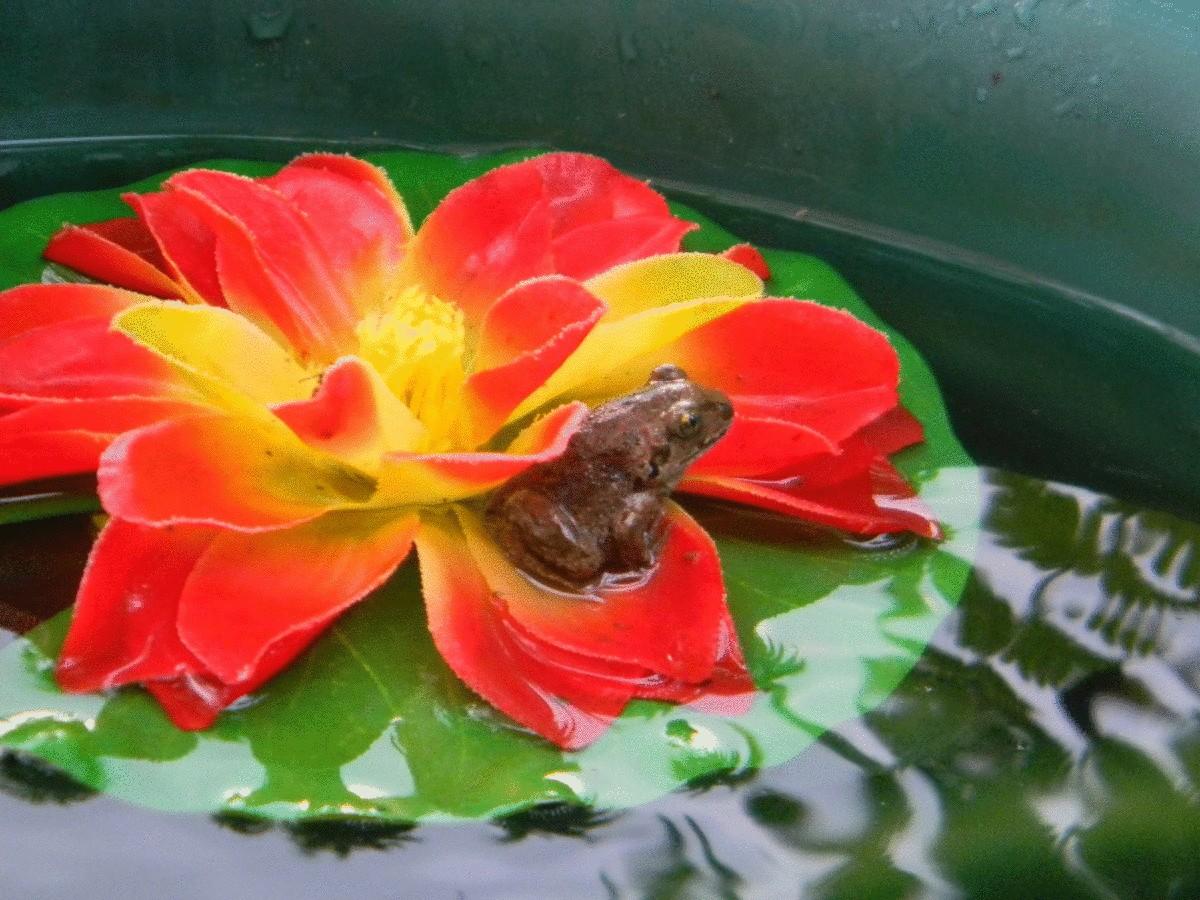 Польза ящериц, лягушек, жаб и ежей на участке