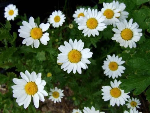 Цветущие покровные растения — идеальное решение для тенистого сада
