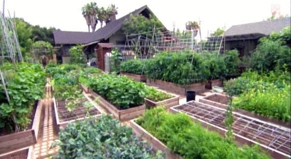 ферма Urban Homestead