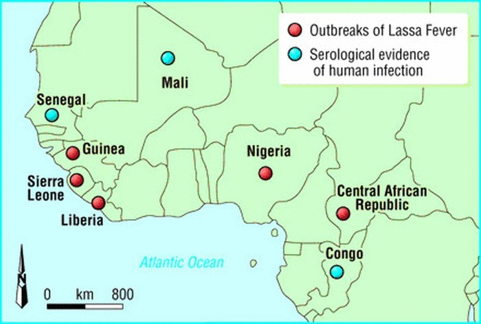 a history of lassa fever in west africa Abstract lassa fever is a viral hemorrhagic illness responsible for disease outbreaks across west africa it is a zoonosis, with the primary reservoir species identified as the natal multimammate mouse, mastomys natalensisthe host is distributed across sub-saharan africa while the virus's range appears to be restricted to west africa.