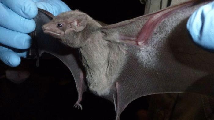 Летучие мыши - угроза для домашних животных и людей.