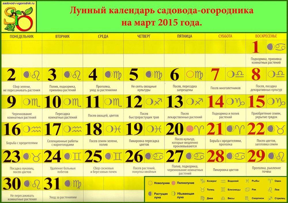 Лунный календарь фиалок на июнь 2016 года