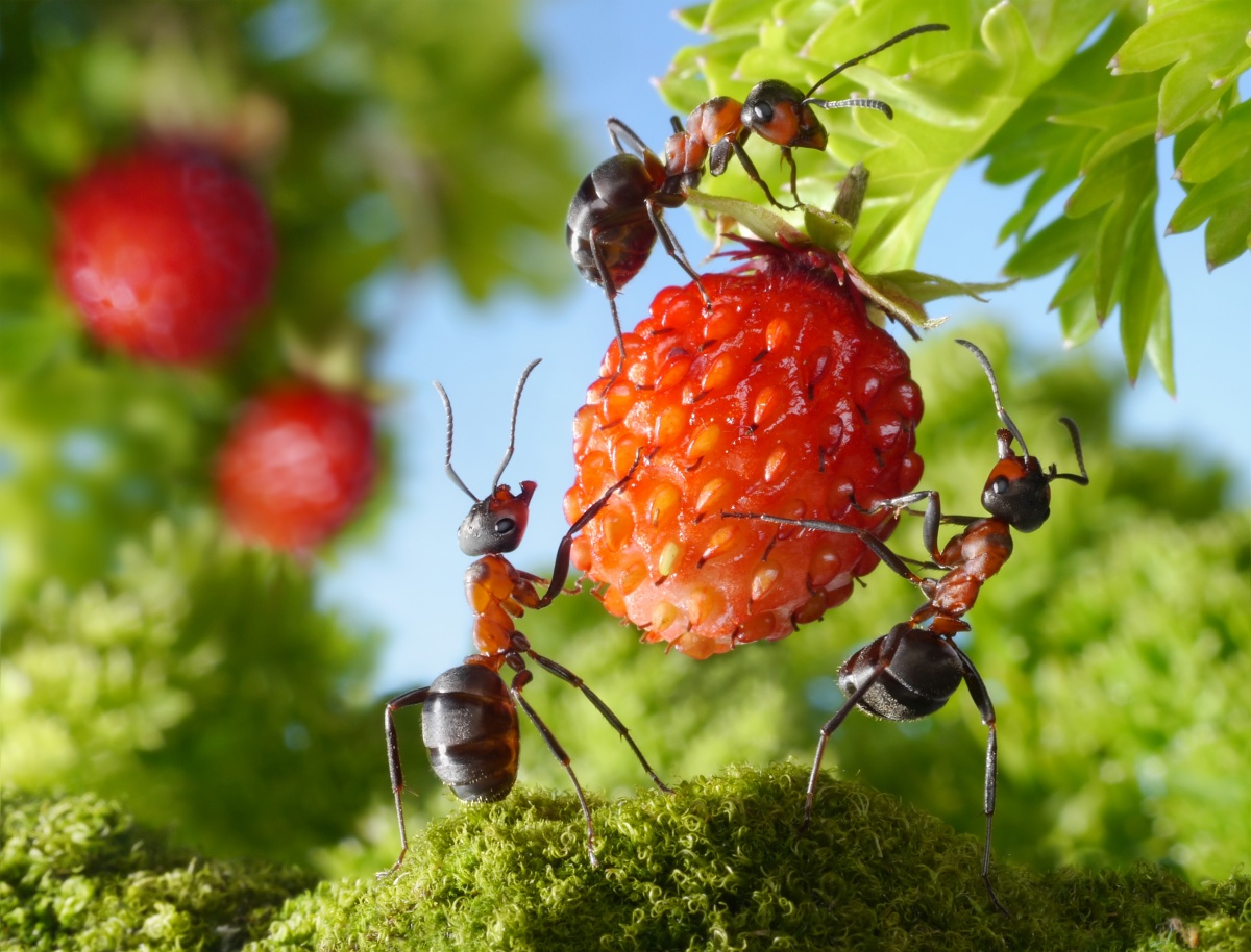 Когда муравьев становится слишком много, мы вынуждены с ними бороться