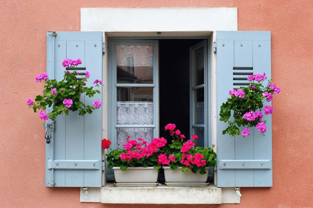Цветы на окна картинки