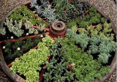 Как и из каких растений создать пряный садик