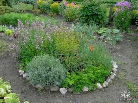 только как красиво посадить пряную траву на саду фото Леночку можно поздравить