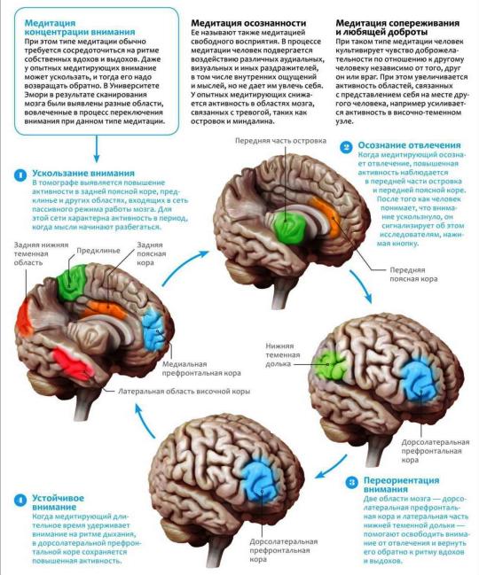 Нейробиология медитации Original_meditaciya_info