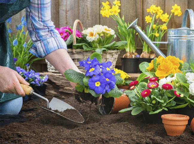 Посевной календарь для садоводов и огородников