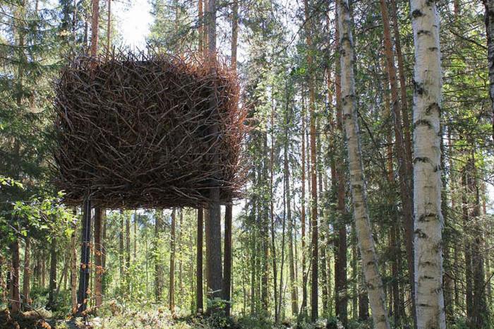 Дом на дереве в виде огромного птичьего гнезда.