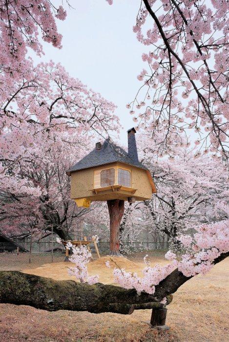 Сказочный чайный домик на дереве.