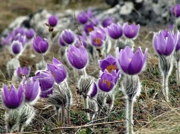 Цветы убийцы