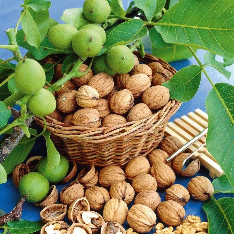 Целебная сила грецкого ореха — 20 рецептов народной медицины  http://econet.ru/