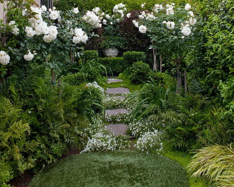 Самые красивые сорта белых роз для Вашей усадьбы-http://econet.ru/