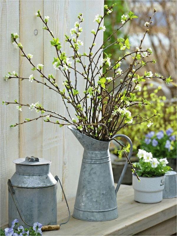 Вишню отличают нежно-белые цветы и зеленые кончики листочков http://econet.ru/category/usadba
