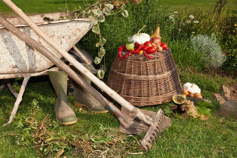 Дела огородные: растения-спутники